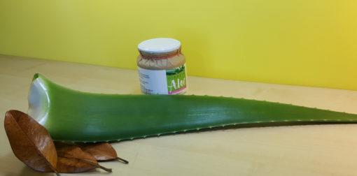 Foglie di Aloe Vera - Vendita - Acquista ora le sue proprietà curative - Pianeta Aloe